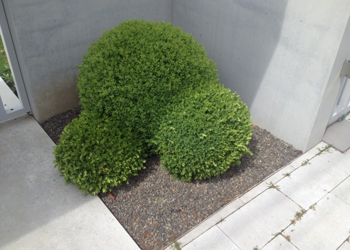 Növényesítés